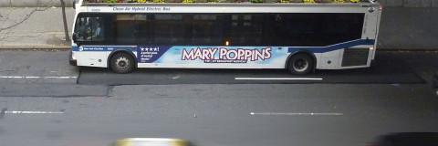 BusRoots o jardines en los autobuses de la ciudad